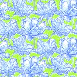 Pattern with field of peony flowers Royalty Free Stock Image