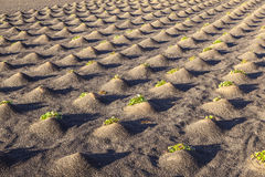 Pattern of field with vegetables Royalty Free Stock Photo
