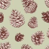 Pattern of the fir cones. Vector pattern of the drawn pine cones Royalty Free Stock Images