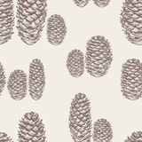Pattern of the fir cones Stock Images