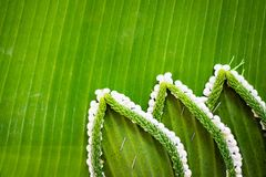 Pattern of floating basket by banana leaf for Loy Kratong Festival, river goddess worship ceremony, the famous festival. Pattern of floating basket by banana stock photos