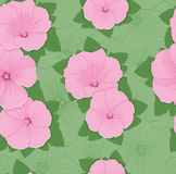 Pattern floral seamless Royalty Free Stock Image
