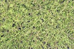 Pattern flower grass Royalty Free Stock Photos