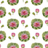 Pattern flower lotus Stock Photography