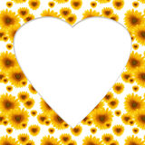 Pattern flower sunflower greeting card billet. Pattern flower sunflower  heart-shaped  white background greeting card billet Royalty Free Stock Photos