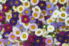 Pattern of flowers of different colors. Pattern of beautiful flowers of different colors Royalty Free Stock Image