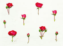 The pattern of flowers, red roses Stock Photo