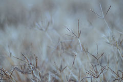 Pattern form Die grass Stock Images
