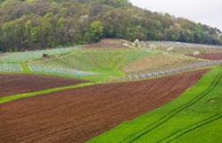Pattern formed by rows of grape vines in vineyard Castell Royalty Free Stock Photo