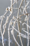 Pattern of frost on the grass. Christmas abstraction. Stock Photography