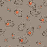 Pattern with fruits Physalis Royalty Free Stock Photo