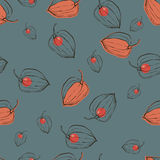 Pattern with fruits Physalis Royalty Free Stock Images