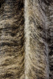 Pattern for fur. Feather and fur in natural color and texture, as background and texture Stock Image
