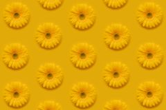 Pattern of gerbera stock photo