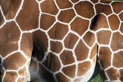 Pattern giraffe print Royalty Free Stock Photography