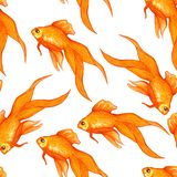 Pattern with goldfish on white background vector illustration