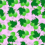 A pattern from a gooseberry. Royalty Free Stock Images