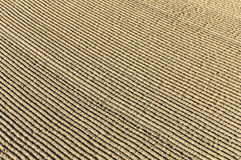 Pattern of grated sand at the Beach in Miami Stock Photography