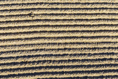 Pattern of grated sand at the Beach in Miami Stock Image