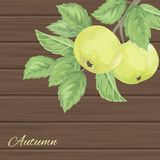 Pattern with green apples and leaves Stock Image