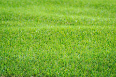 Pattern of green artificial grass texture and background Stock Photos