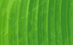 Pattern of green banana leaf background Royalty Free Stock Photos
