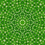 Pattern of green cactus with needles Stock Photography