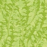 Pattern, green dandelion leaves Royalty Free Stock Image