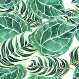Pattern of green decorative isolated motley palm leafs Stock Photography