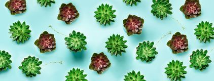Pattern of green exotic succulents on blue background. Flat lay. Top view. Pop art design, creative summer concept. Minimal style. Pattern of green exotic royalty free stock photography