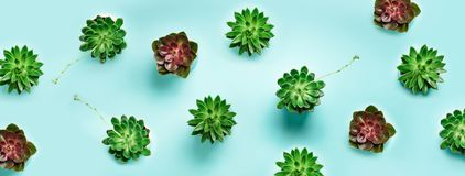 Pattern of green exotic succulents on blue background. Flat lay. Top view. Pop art design, creative summer concept. Minimal style. Pattern of green exotic royalty free stock images