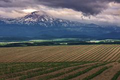 Pattern green field with mountain ranges background Stock Photography