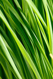 Pattern of green grass Royalty Free Stock Photography
