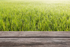 Pattern of green grass and wood floor Royalty Free Stock Photography