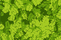 Pattern of green leaf background Royalty Free Stock Photography