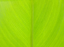 Pattern of green leaf Stock Image