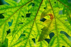 Pattern on green leaf in the morning Stock Image