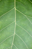Pattern on green leaf. Royalty Free Stock Photo