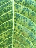 Pattern of green leaf Stock Photos