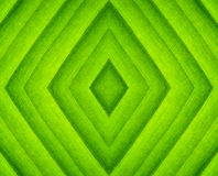 Pattern of green leaf Stock Images