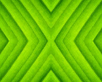 Pattern of green leaf Royalty Free Stock Image
