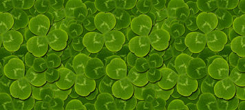 Pattern green leaves clover trefoil Royalty Free Stock Photo