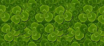 Pattern green leaves clover trefoil Royalty Free Stock Photo