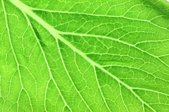 Pattern of green leaves in a macro. Stock Image
