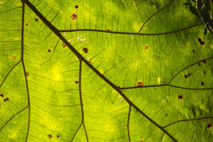 Pattern of green leaves Stock Images