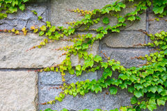 Pattern of green plant. On wall Stock Images