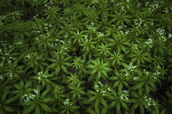 Pattern of green plants forming abstract background royalty free stock photo