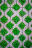 The pattern, green weeds fill the laying floor tiles Royalty Free Stock Photography