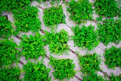 The pattern, green weeds fill the laying floor tiles Royalty Free Stock Photo