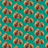 Pattern groundhog Royalty Free Stock Photo